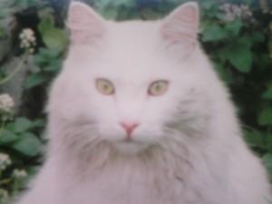 PlumaBlanca in his catnip patch.
